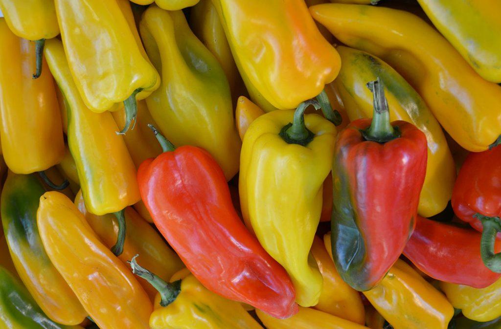 Il peperone di Carmagnola, dolce e bello da vedere