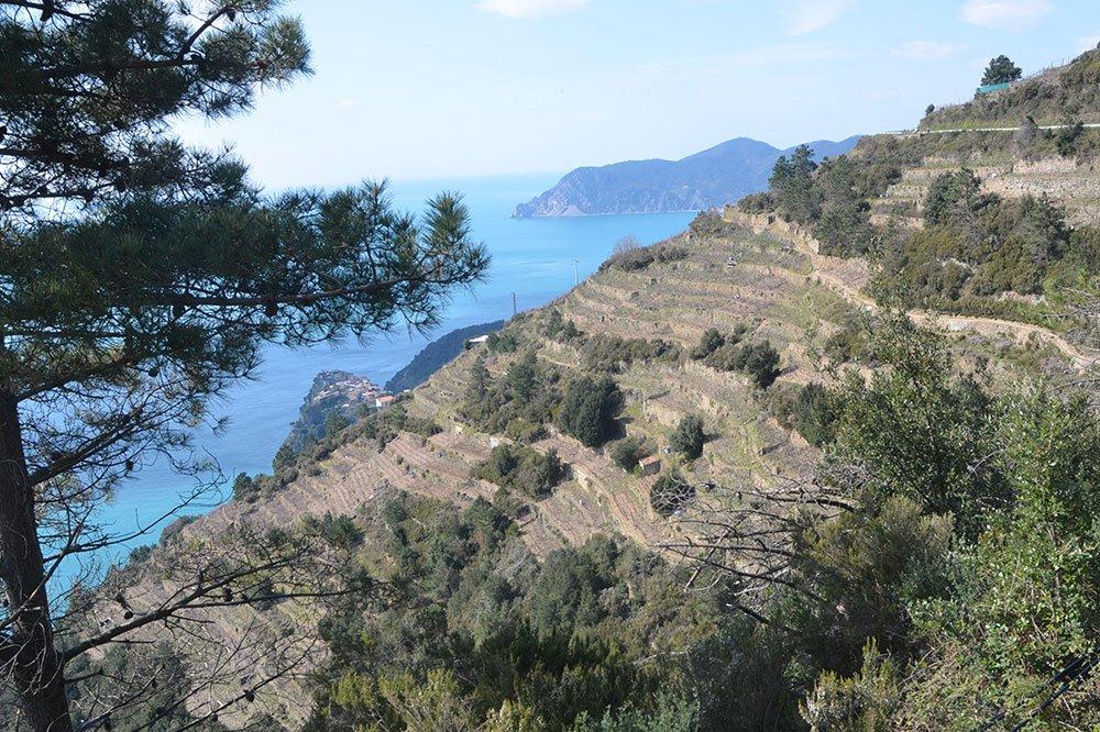 Paesaggi terrazzati: dal dissesto al recupero