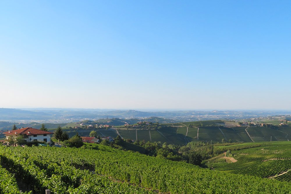 Brunello e Barbaresco, nobiltà a confronto