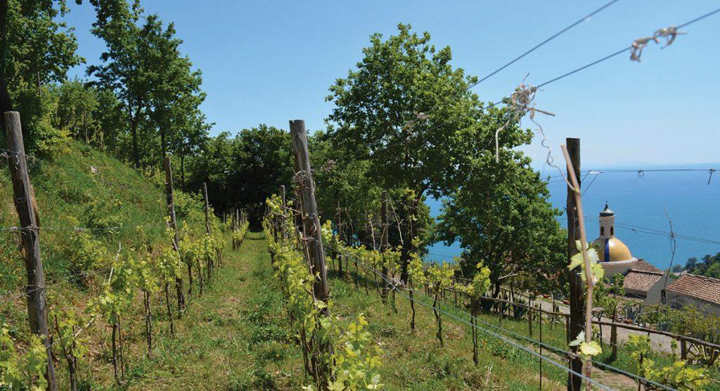 Costa d'Amalfi, la vite tra mare e monti