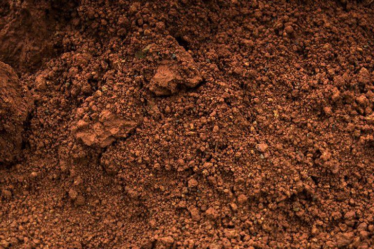 Investire sul terreno per avere piante più sane