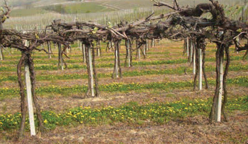 Tra principio di precauzione e alternative agronomiche