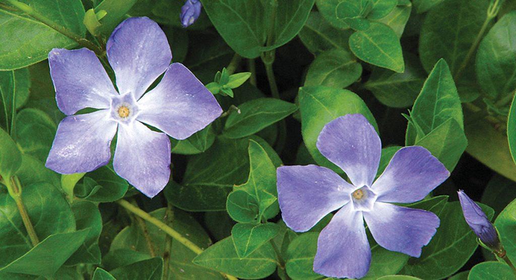 Roero, l'incanto delle fioriture spontanee