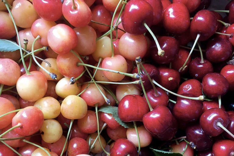 La ciliegia di Revigliasco