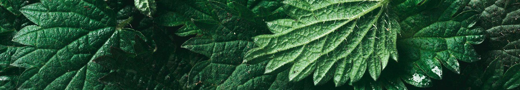 Le piante alimentari
