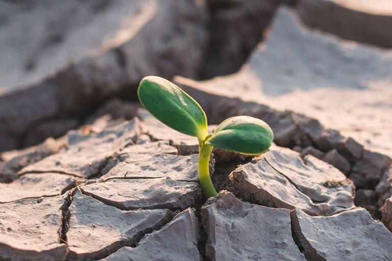 In tema di cambiamenti climatici