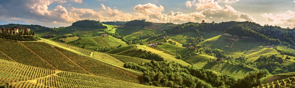 Arriva il vino nuovo. E con esso Barolo & Co.