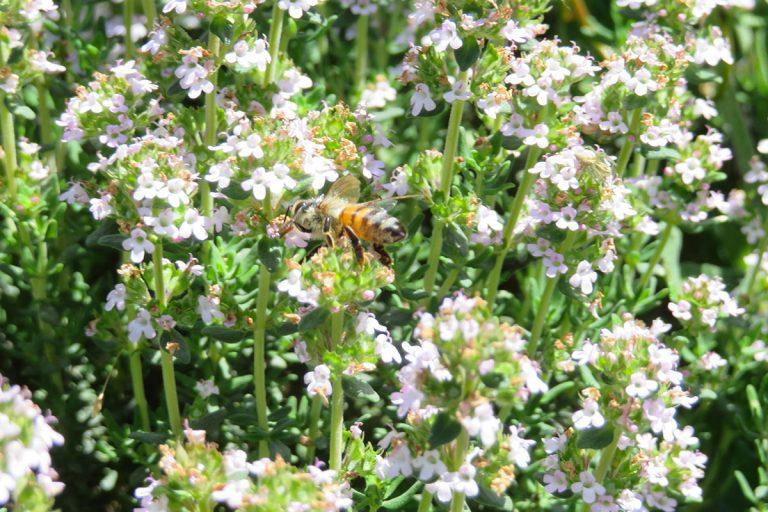 Di fiore in fiore, nella Giornata mondiale delle api