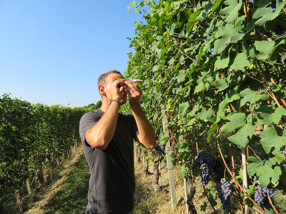 Incentivi all'insediamento dei giovani in agricoltura, la Regione Piemonte aumenta il fondo