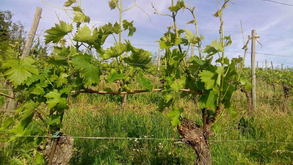 Il vino piemontese fa squadra con Piemonte Land of Perfection