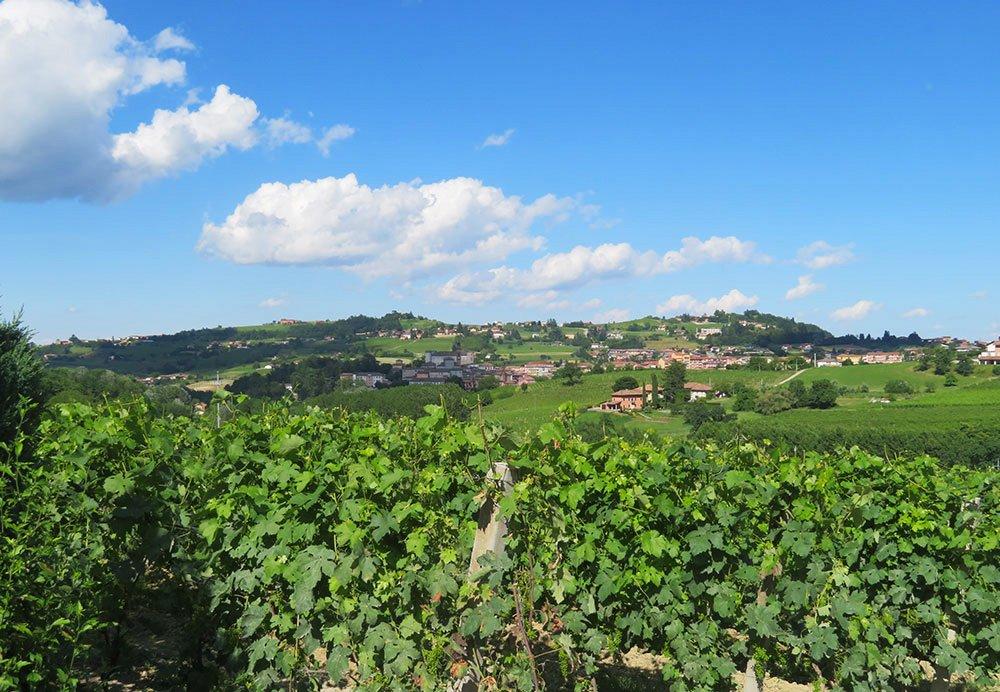 Barbera d'Asti, il vino internazionale