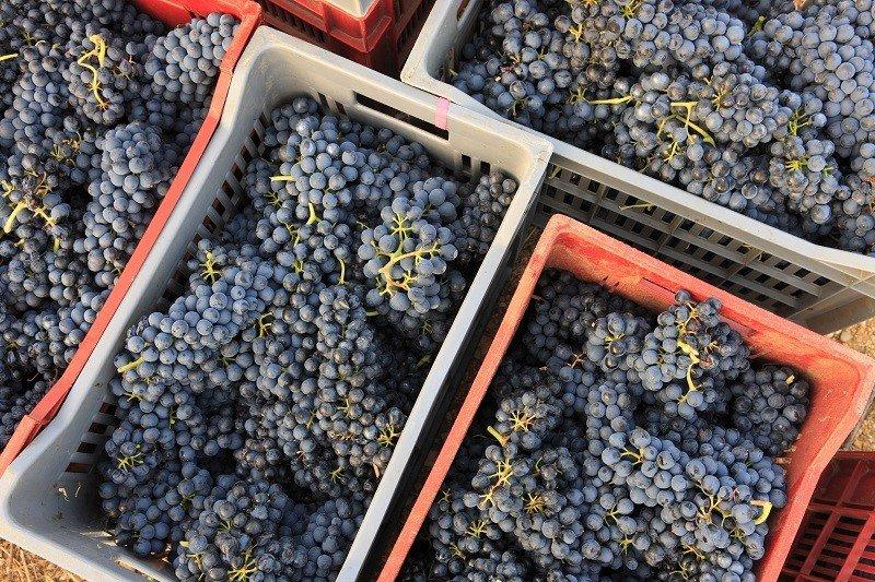 Vignaioli Piemontesi, un accordo preventivo per la vendemmia 2020