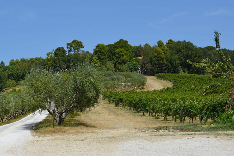 """MEDCLIV, il progetto europeo """"Mediterranean Climate Vine and Wine Ecosystem"""", lancia il sondaggio internazionale su cambiamento climatico e viticoltura"""