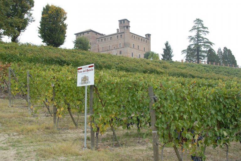 Weinwirtschaft Magazine premia quattro cantine piemontesi nella speciale classifica 2020 dedicata alla cooperazione vitivinicola italiana