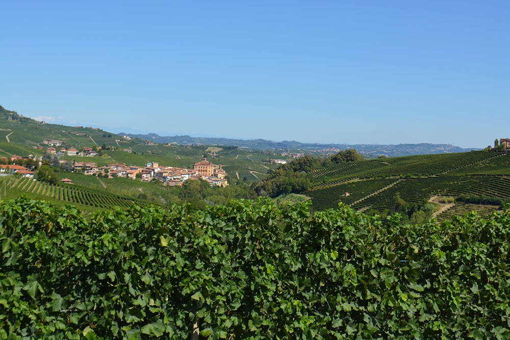 """Barolo, il """"re dei vini"""" amato dal mondo intero"""