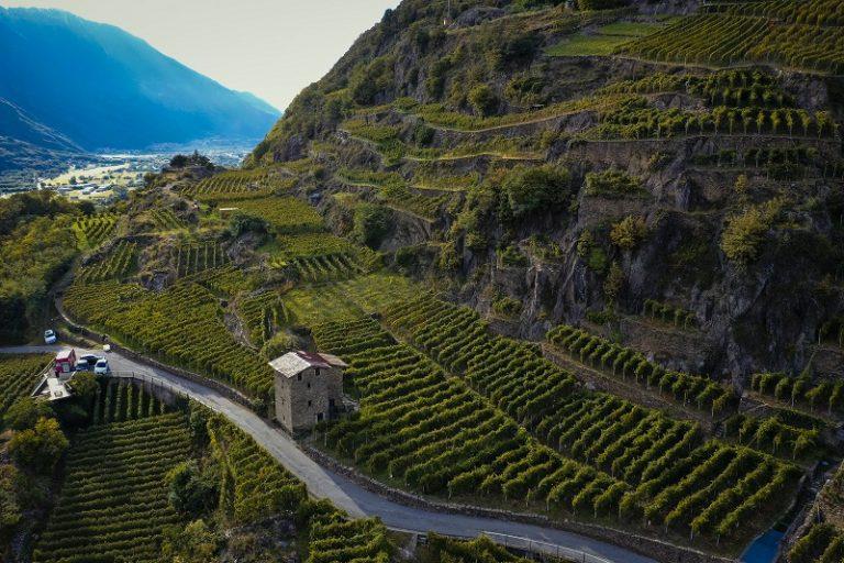 """""""Increase Sfursat"""", un progetto scientifico per la valorizzazione dello Sfursat di Valtellina Docg"""