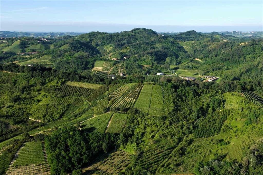 Il Roero propone vigne libere dal diserbo chimico