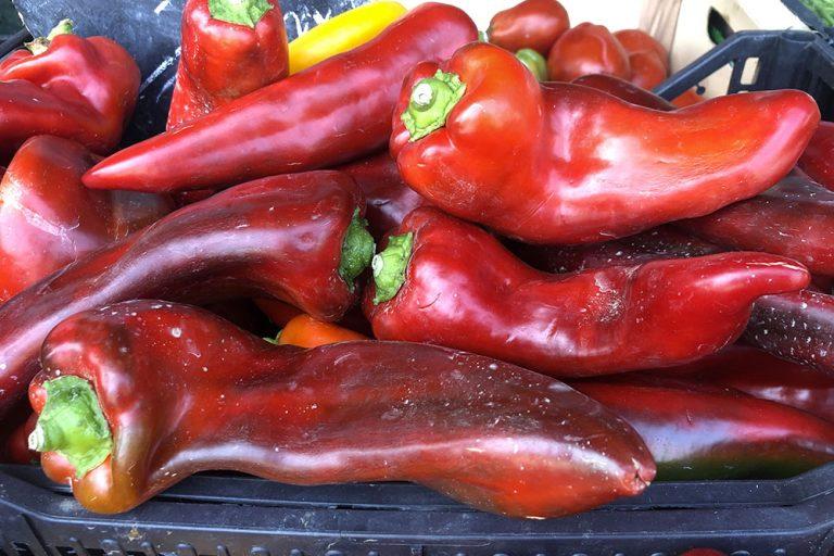 Peperoni e peperoncini: coltivarli è di moda, gustarli è un piacere